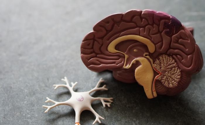 Wie unser Gehirn Veränderungen unterstützt oderverhindert